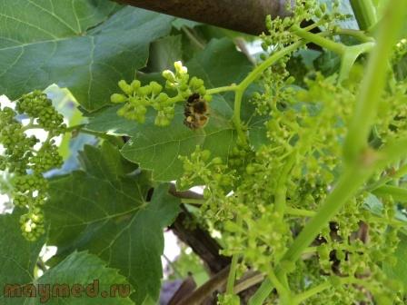 30 Пчела опылительница