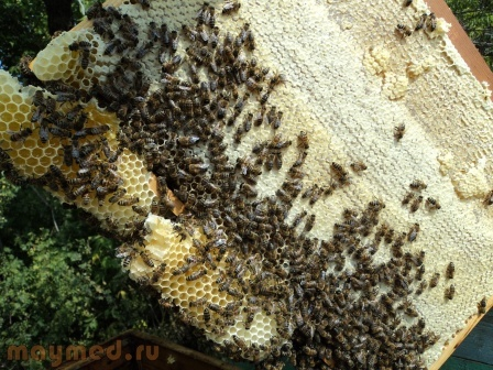 38 Рамка мёда