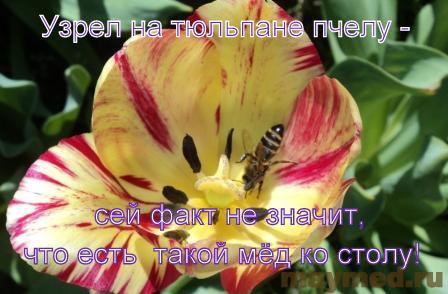 Пчела на тюльпане - демотиватор
