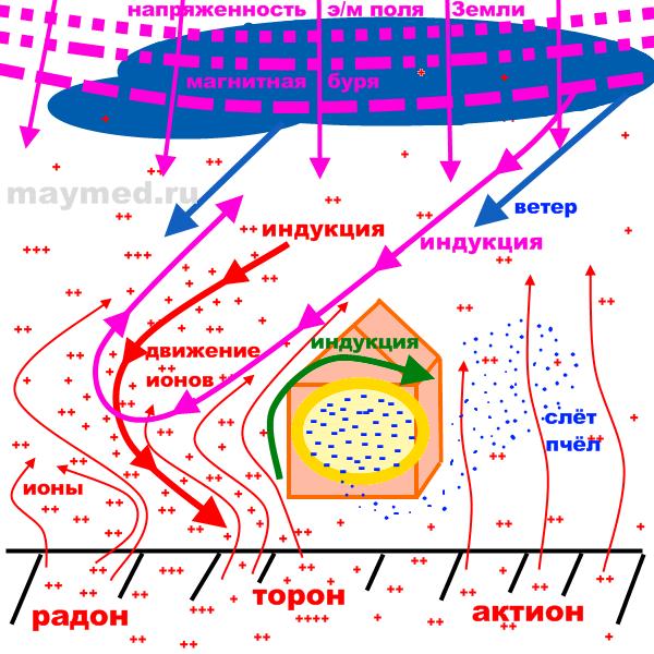 Схема индукции тока в природе