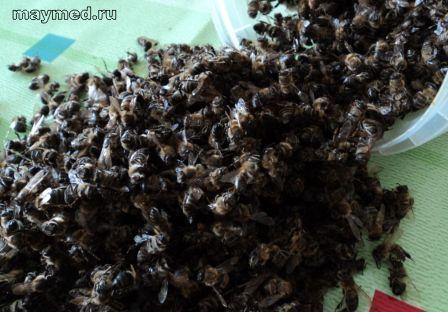 Пчелиный подмор лечит.