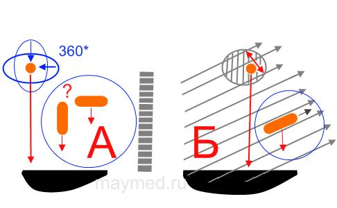 Схема ориентации пчелы в