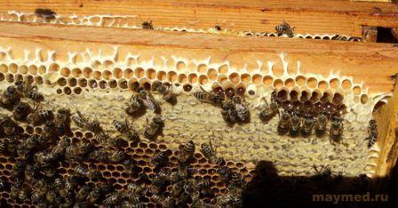 Полезен ли мед для сосудов