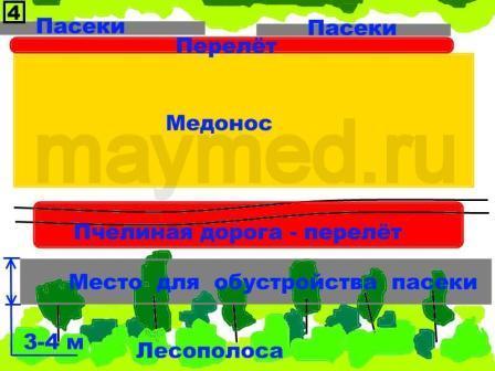 Схема расположения главной пчелиной дороги в поле