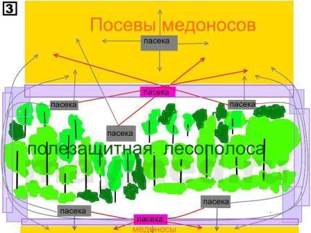 Схема пчелиных дорог в поле